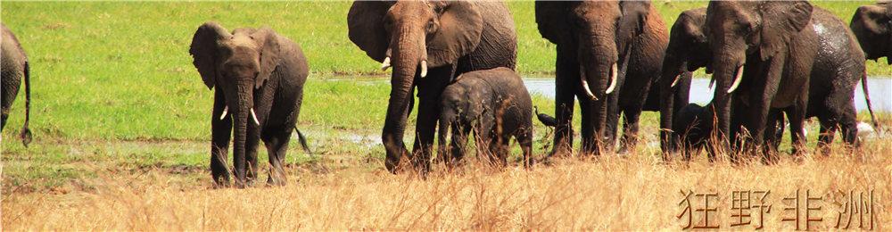 非洲站立动物叫什么