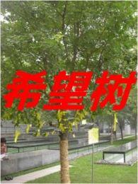 微电影《希望树》