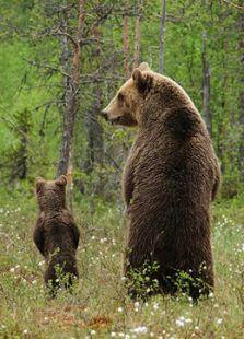动物超级父母