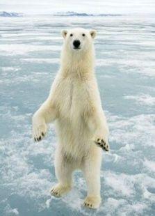 BBC:北极熊-冰上侦探