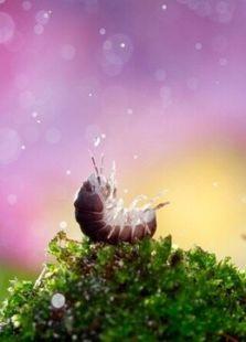 BBC:大自然的微观世界