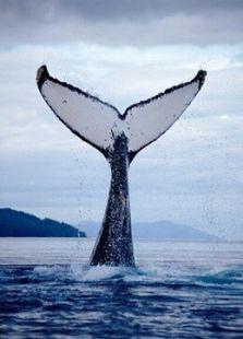 BBC:吉米与鲸语者