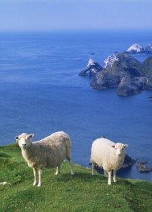 BBC:西蒙·金的设得兰岛日记