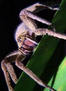 BBC:内奥米的自然噩梦之旅