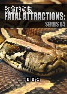 BBC:致命的宠物(第四季)