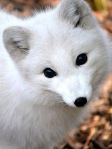 BBC:雪地动物