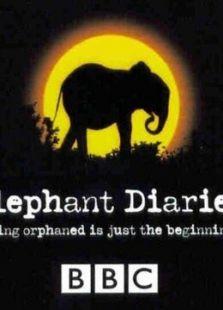 BBC:大象日记第二季