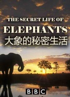 BBC:大象的秘密生活