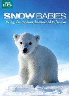 BBC:雪中幼崽