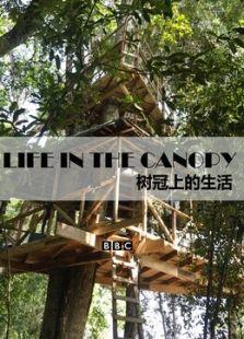 BBC:树冠上的生活